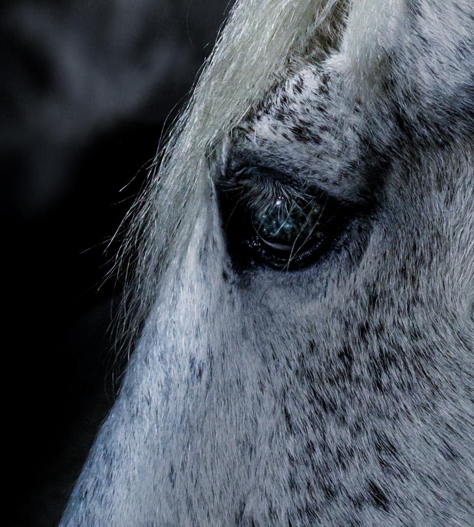 White-Unicorn-Detail
